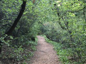 Colorado Trail Running